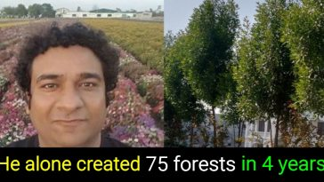 Meet the Green Man of India: An IRS officer who harbored 75 forests in a span of 4 years