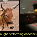 Animal cruelty: 55-yr-old man rapes a cow in Madhya Pradesh, details inside
