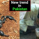 Smoking dead scorpions is the current addiction in Pakistan