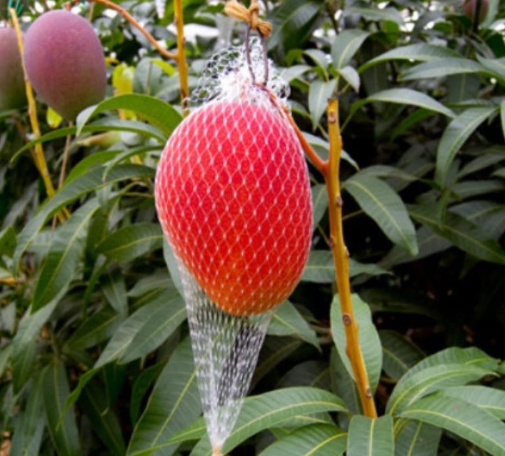 These expensive fruits in the world will leave you Shell-Shocked