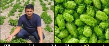 Bihar Farmer grows a vegetable that costs ₹85,000 a kg, it is also available in international markets